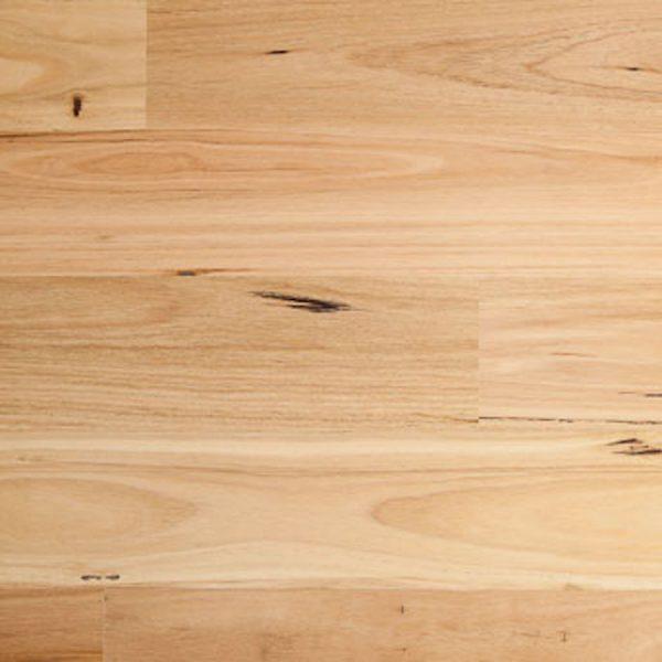 Embelton Blackbutt Gloss